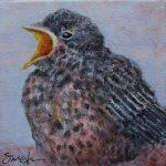 Baby Robin – Sat. Mar 17